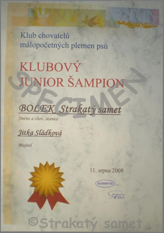diploma of Club Junior Champion - BOLEK Strakaty samet