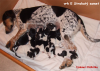 Berenika with E-puppies, thumbnail